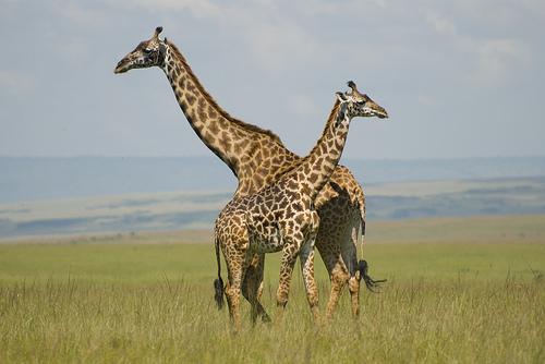 Masai Mara, Kenya Photo: Paul Mannix, used under Creative Commons License (By 2.0)