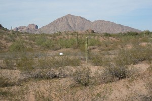 Papago Park, Phoenix, Arizona - Photo: Dougtone used under Creative Commons License (By 2.0)