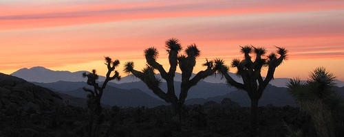 Sunset at Joshua Tree National Park - Photo: Jennie & Jacques, used under Creative Commons License (By 2.0)
