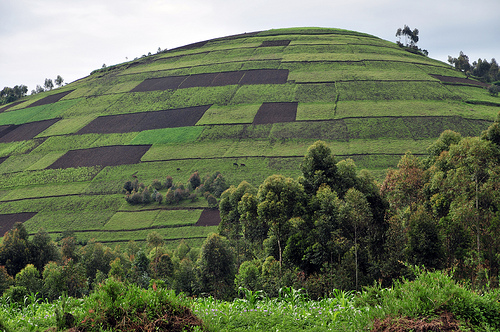Uganda - Photo: Neil Palmer of CIAT International Center for Tropical Agriculture, used under Creative Commons License (By 2.0)