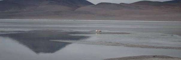 Salar de Uyuni, Bolivia - Photo: (c) WMS of The Flight Deal 2013