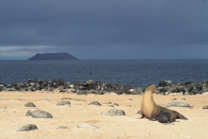 Galapagos Islands, Ecuador. Photo: Derek Keats, used under Creative Commons License (By 2.0)