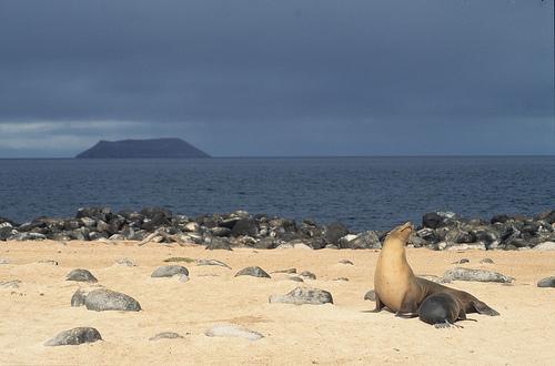 Galapagos Islands, Ecuador. Photo: Derek Keats, used under Creative Commons License (By 2.0)