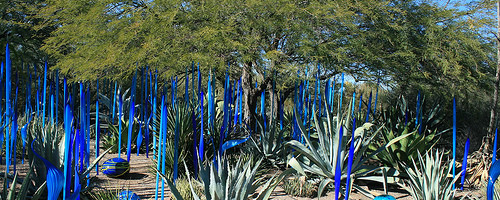 Desert Botanical Gardens, Phoenix, Arizona - Photo: IndyAgent, used under Creative Commons License (By 2.0)