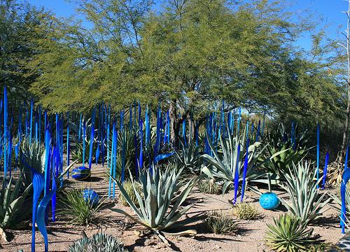 Desert Botanical Gardens, Phoenix, Arizona   Photo: IndyAgent, Used Under  Creative Commons