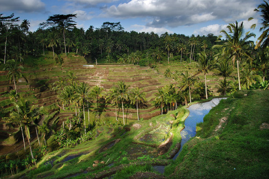 Rice Terraces, Bali, Indonesia - Photo: William Cho via Flickr, used under Creative Commons License (By 2.0)