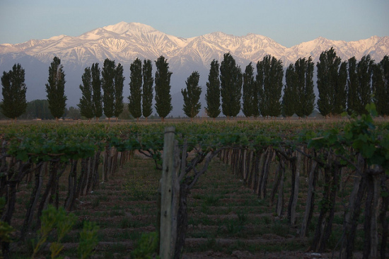 Mendoza, Argentina - Photo: Tony Bailey via Flickr, used under Creative Commons License (By 2.0)