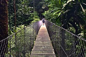 Hanging Bridges – see the rainforest from above! - Photo: (c) 2017 - Yvonne of Hello Wander World