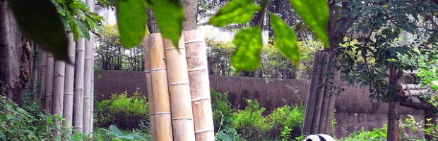 Chengdu Research Base of Giant Panda Breeding, Chengdu, China - Photo: momo via Flickr, used under Creative Commons License (By 2.0)