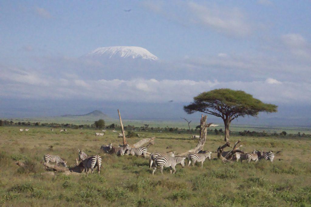 Practical Travel Tips: Safari in Kenya and Tanzania.