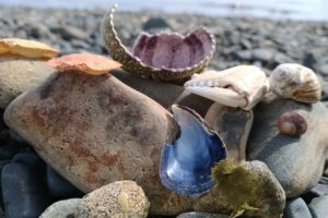 Findings on Devil's Cove Beach - Photo: (c) 2018 - Sarah-Jessica of The World At Your Feet & Fingertips