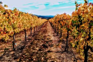 On St. Francis'  self-guided vineyard tour in the Valley of the Moon - Photo: (c) 2018 - Jim Fatzinger, The Travel Organizer