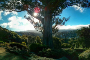 Botanical Gardens, Dunedin, New Zealand - Photo: Brian Taylor via Flickr, used under Creative Commons License (By 2.0)